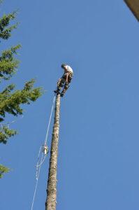 Tree Removal Sandpoint Idaho